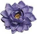 Floating Water Lily from Cobraco | Others