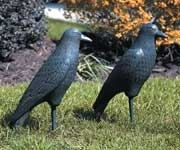 Image Crow from Ornamates