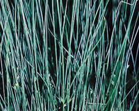 Image Blue Rush