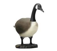 Image Standing Canadian Goose & Feeding Canadian Goose