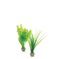 Image biOrb Easy Plant Set Small Green