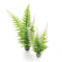 Image biOrb Fern Plant Pack Winter