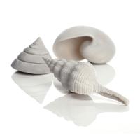 Image biOrb Sea Shells
